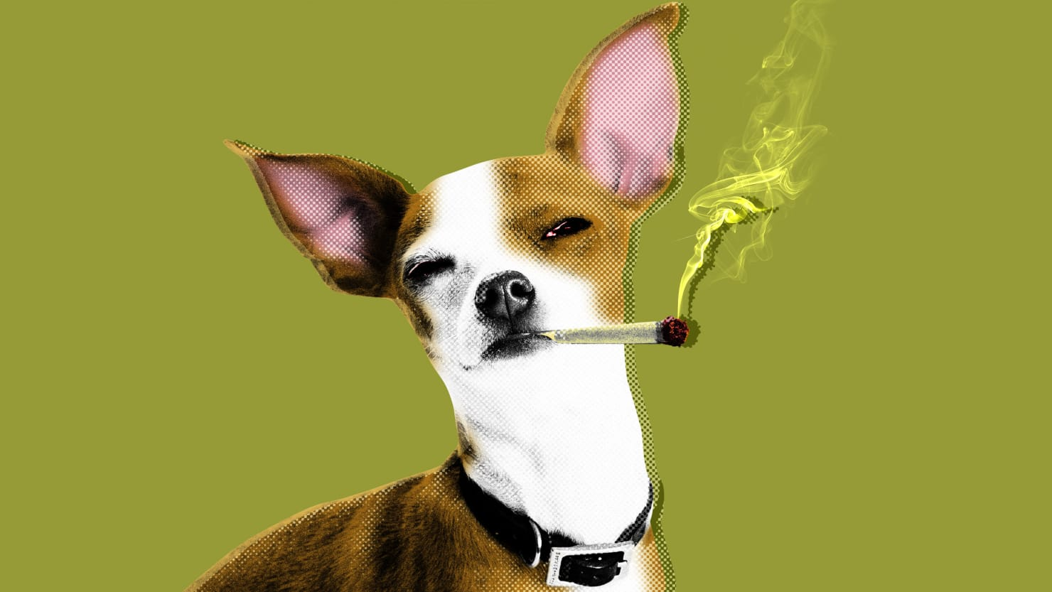 Dog Owners Demand: We Must Feed Fido Weed
