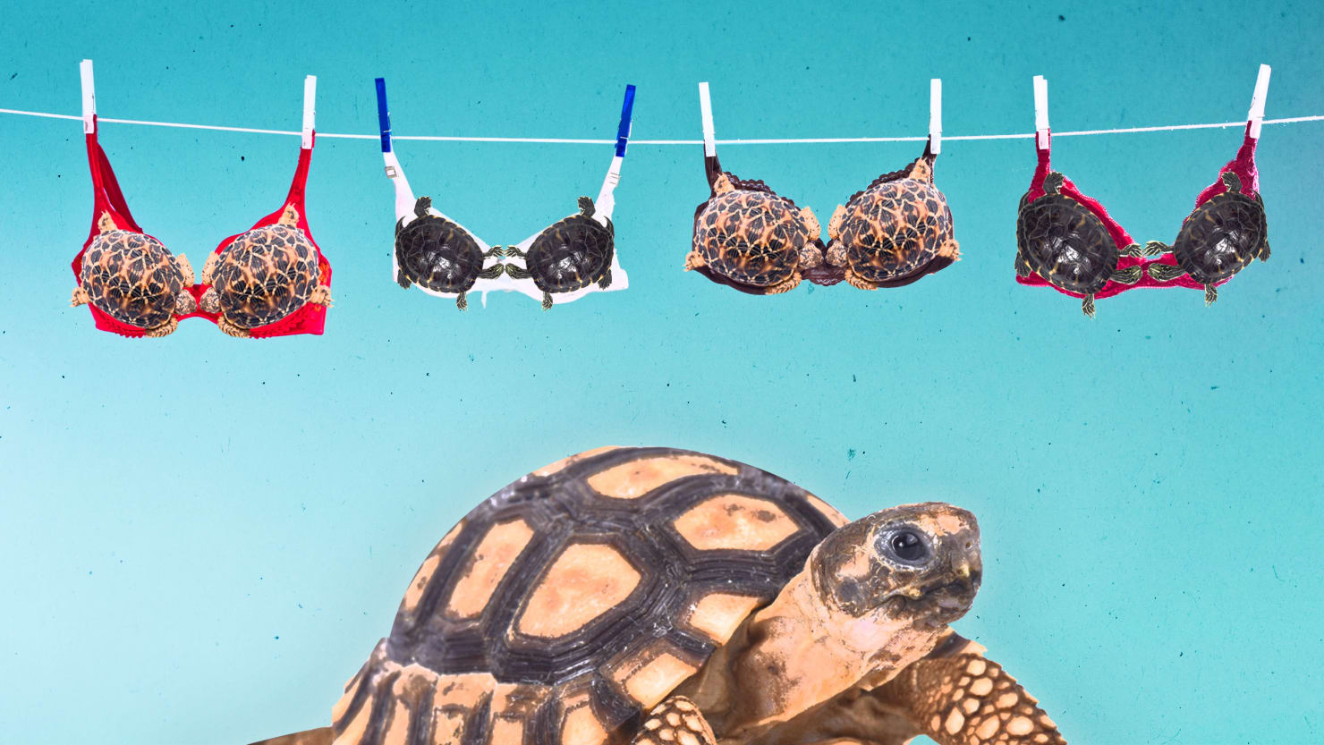 turtle tortoise bikini print richard dick vogt herpetology herpetologist jimh18 david sever willem roosenberg lori neumann lee priya nanjappa