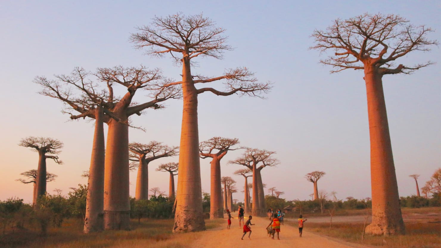 I Fell in Love With Madagascar and Its Sacred Trees