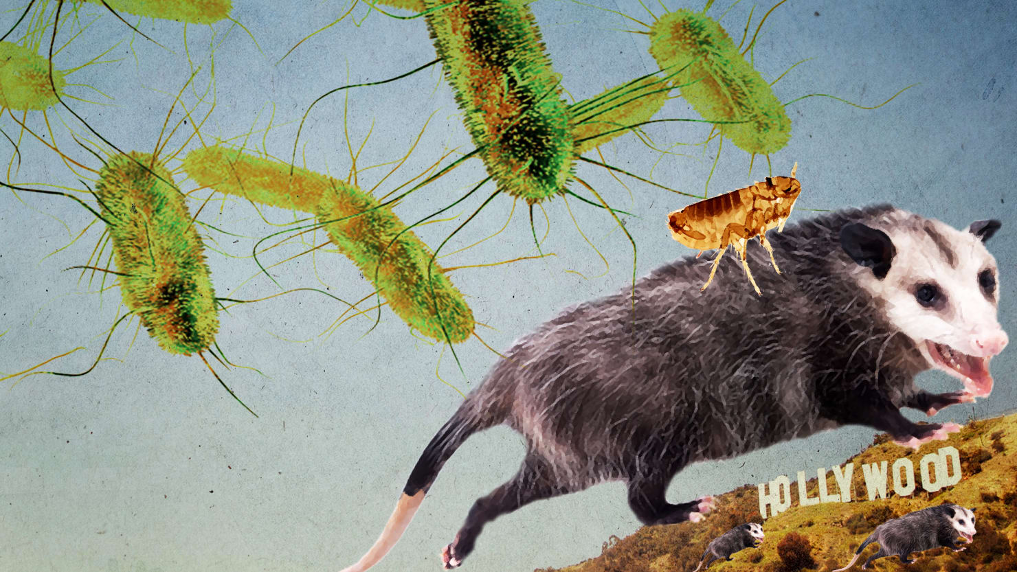 Texas Auto Center >> Flea Poop and Opossums Are Causing a Typhus Outbreak in L.A.