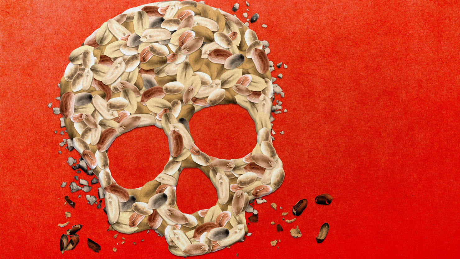 illustration of skull skeleton head made of peanuts peanut allergy