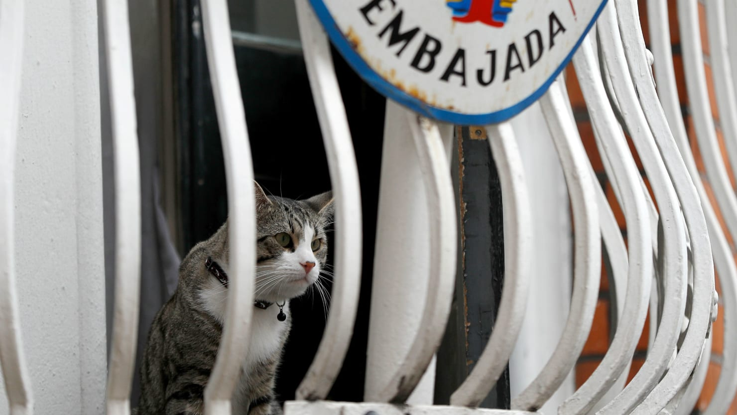 Julian Assange No Longer Has a Cat
