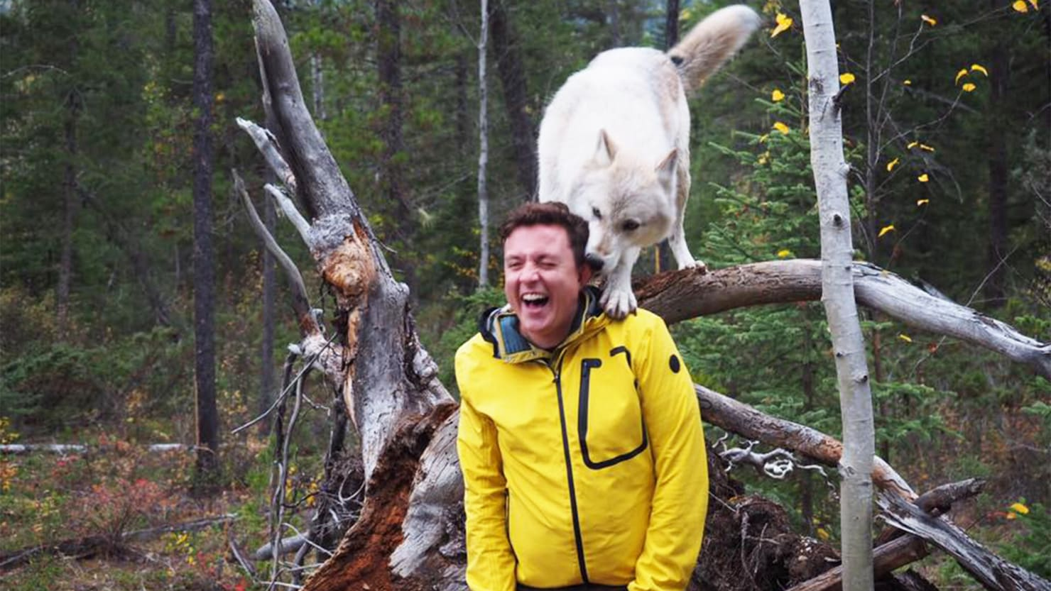 I Walked With Wolves in Canada and Here's How You Can Too