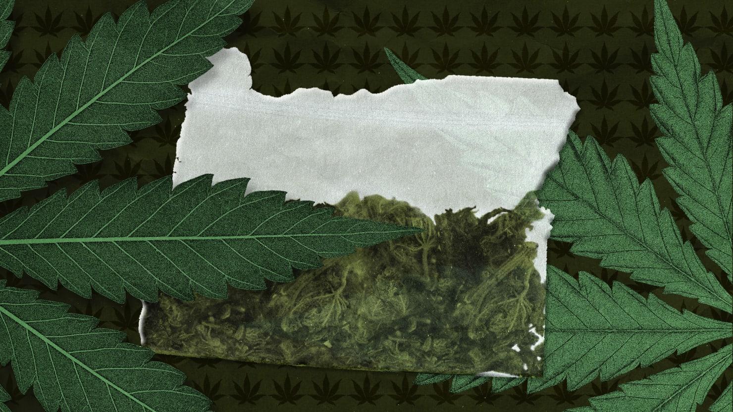 Oregon S Ganja Glut Sends Pot Growers To Black Market