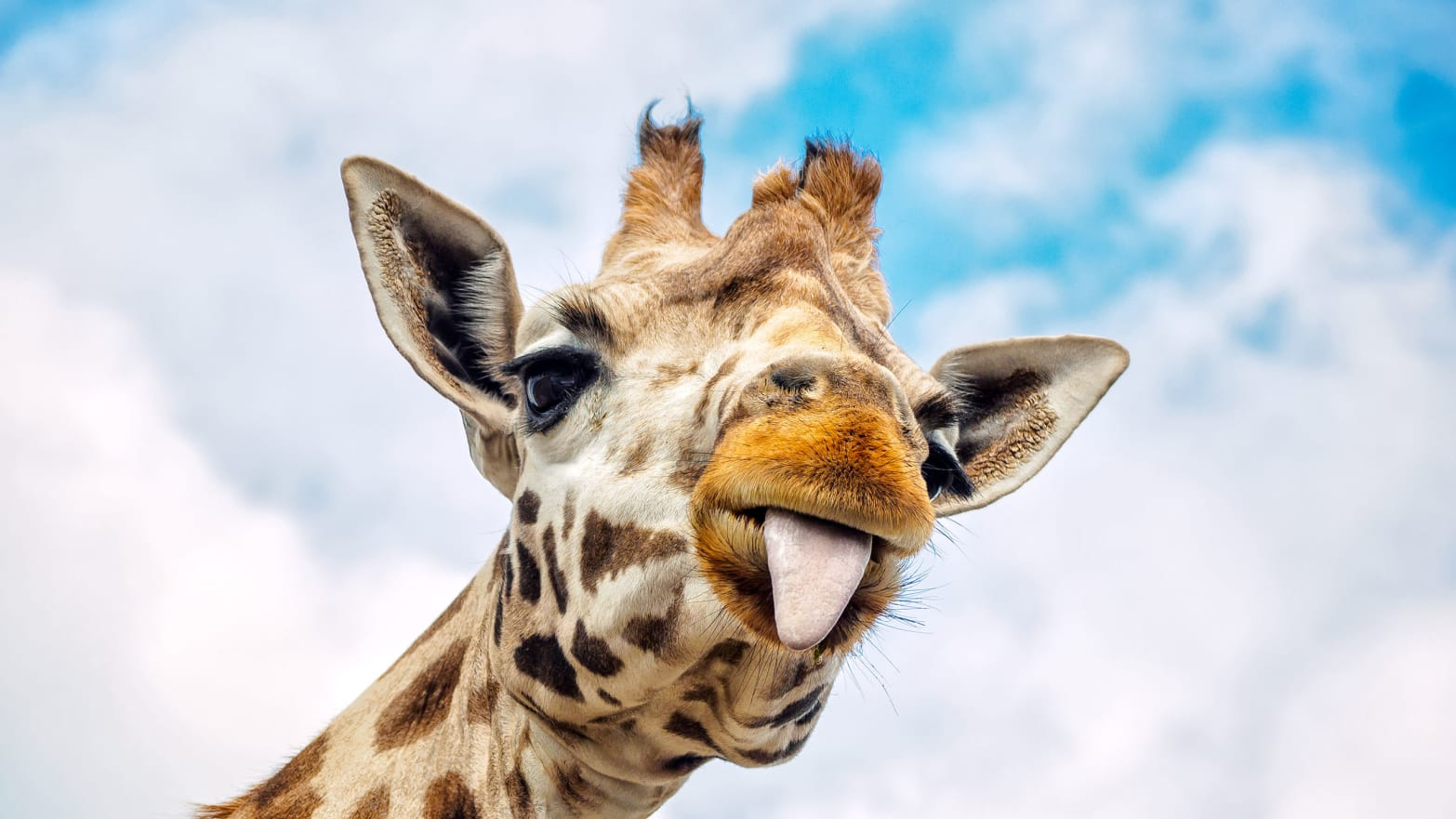 The Internet's Most Famous Pregnant Giraffe Still Hasn't ...