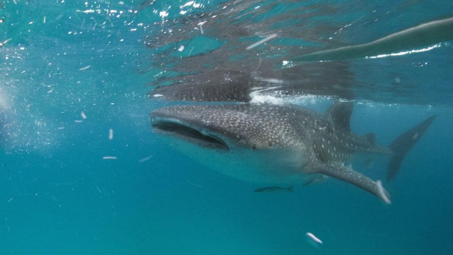 American Tourist Killed in Bahamas Shark Attack