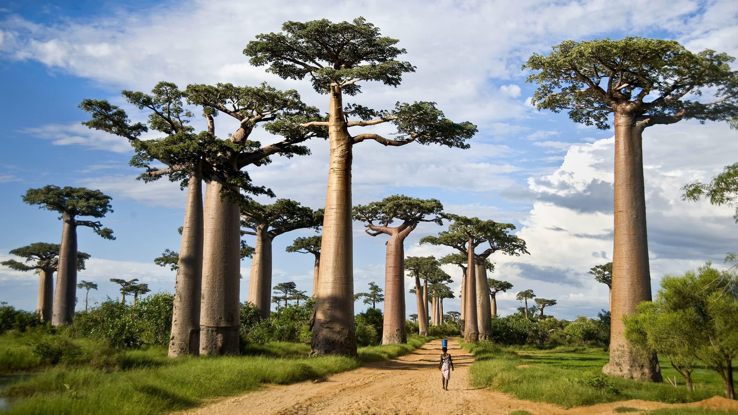 Will Madagascar's Magic Survive the 21st Century?