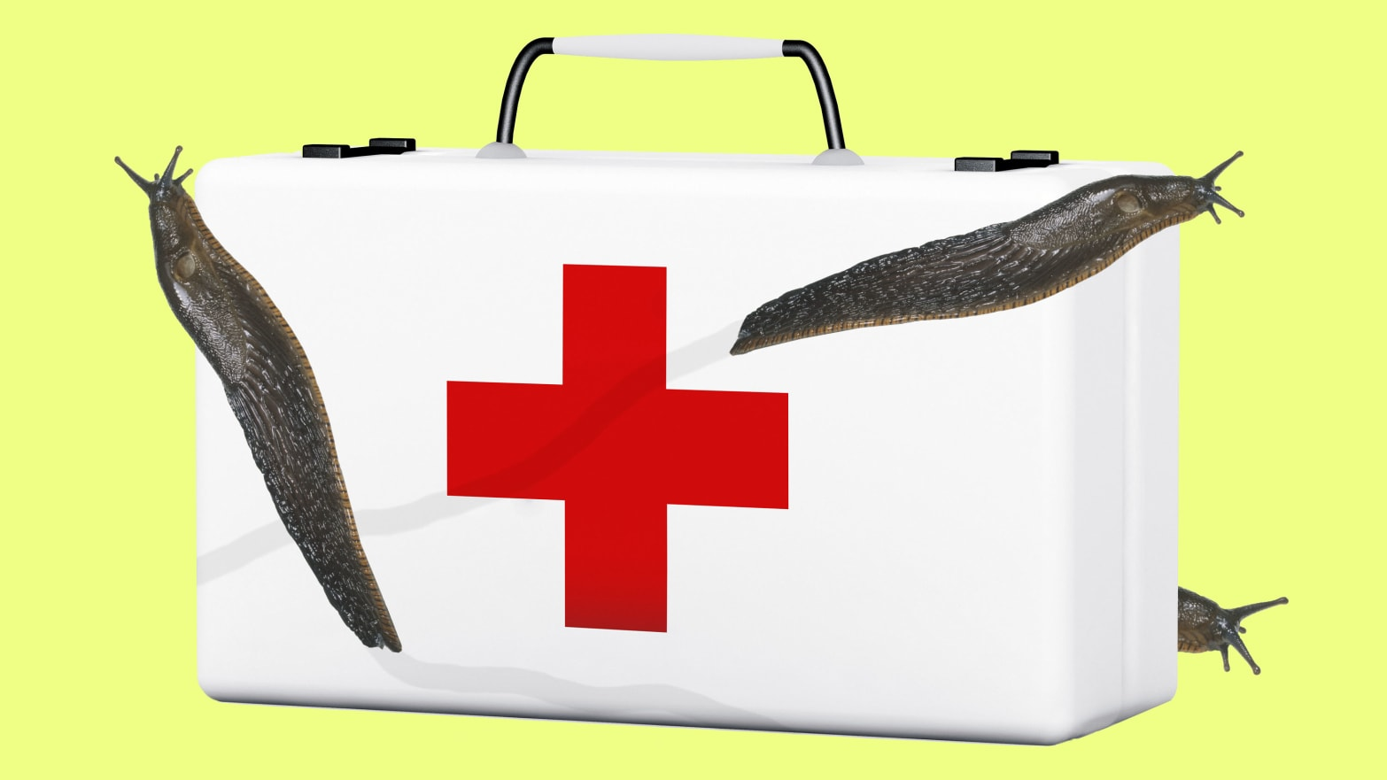 image of a white medical first aid with a red cross in front of the box with three 3 slugs crawling over it in foreground background pastel yellow snail adhesive dusky arion Andrew Smith University of Ithaca