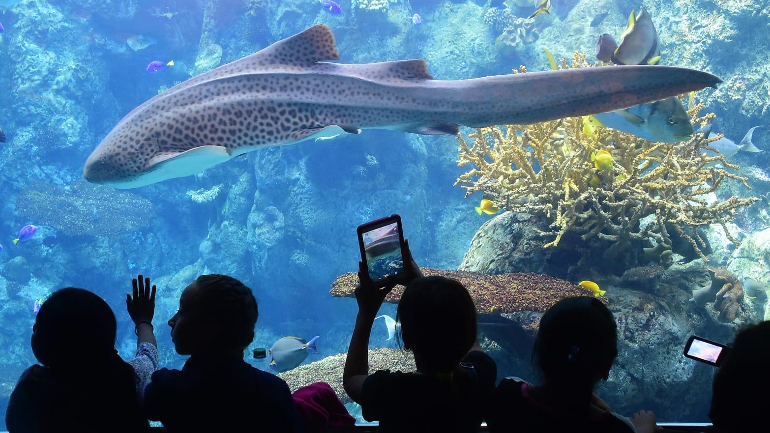 Aquarium of the Pacific Unveils $53 Million New Wing: Is This the Future of Aquariums?