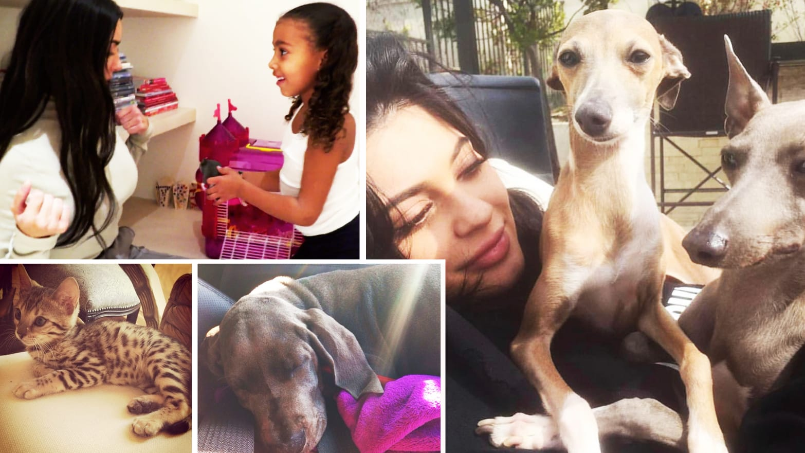Why Do the Kardashians' Pets Keep Mysteriously Disappearing?