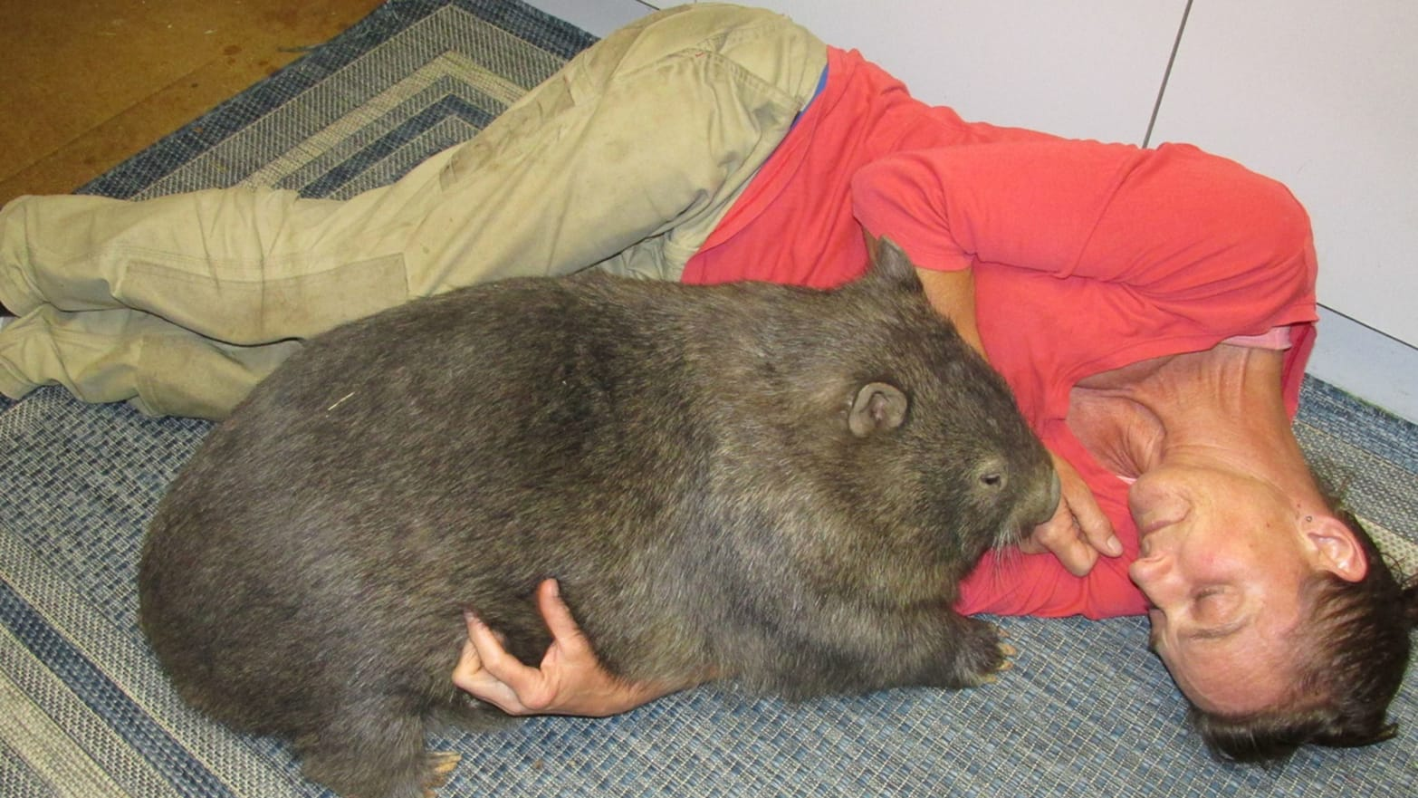 My Wild Time Living in a House Full of Wombats