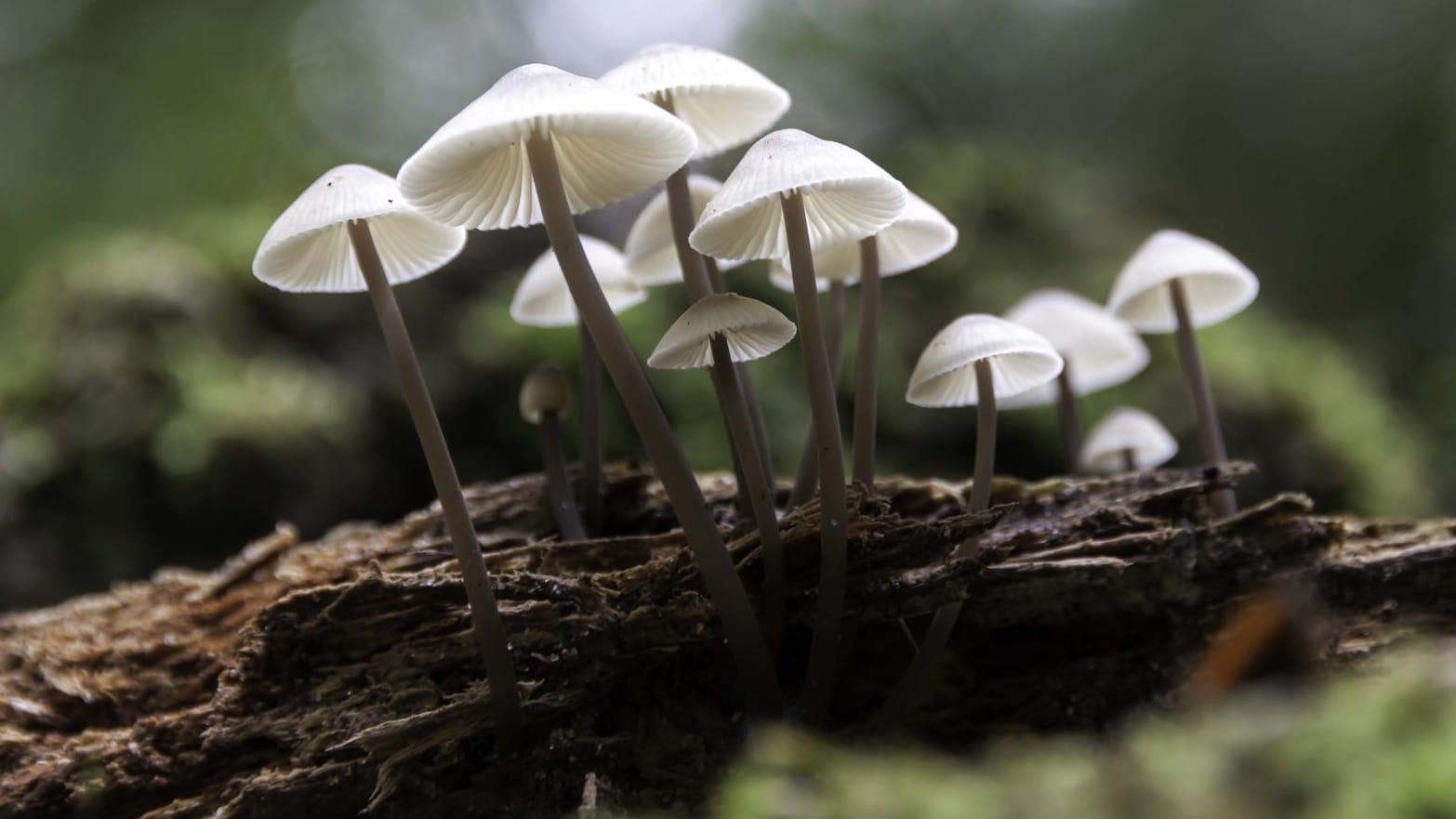 Mushrooms - cover