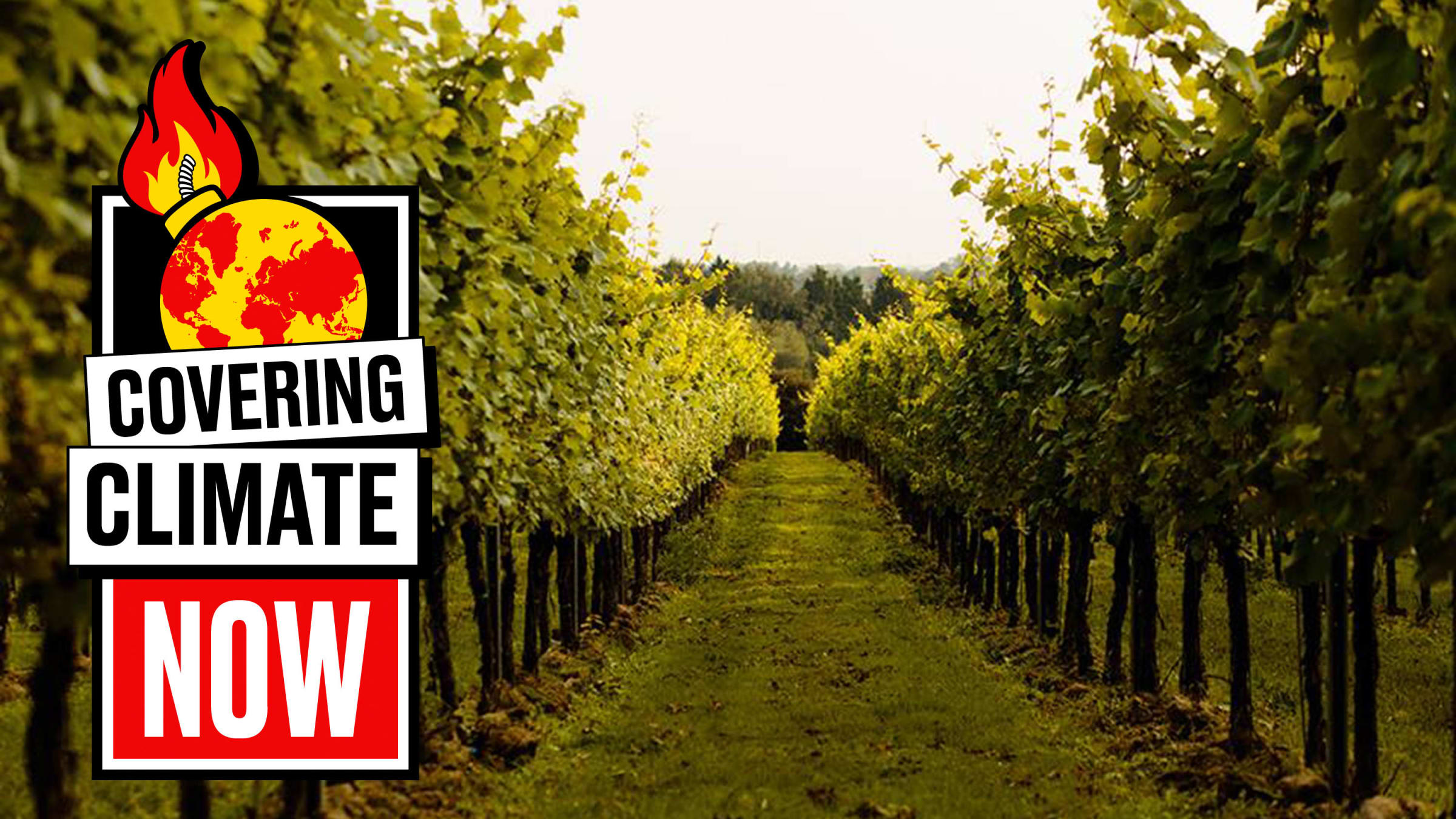 How Climate Change Is Helping British Bubbly to Rival Champagne