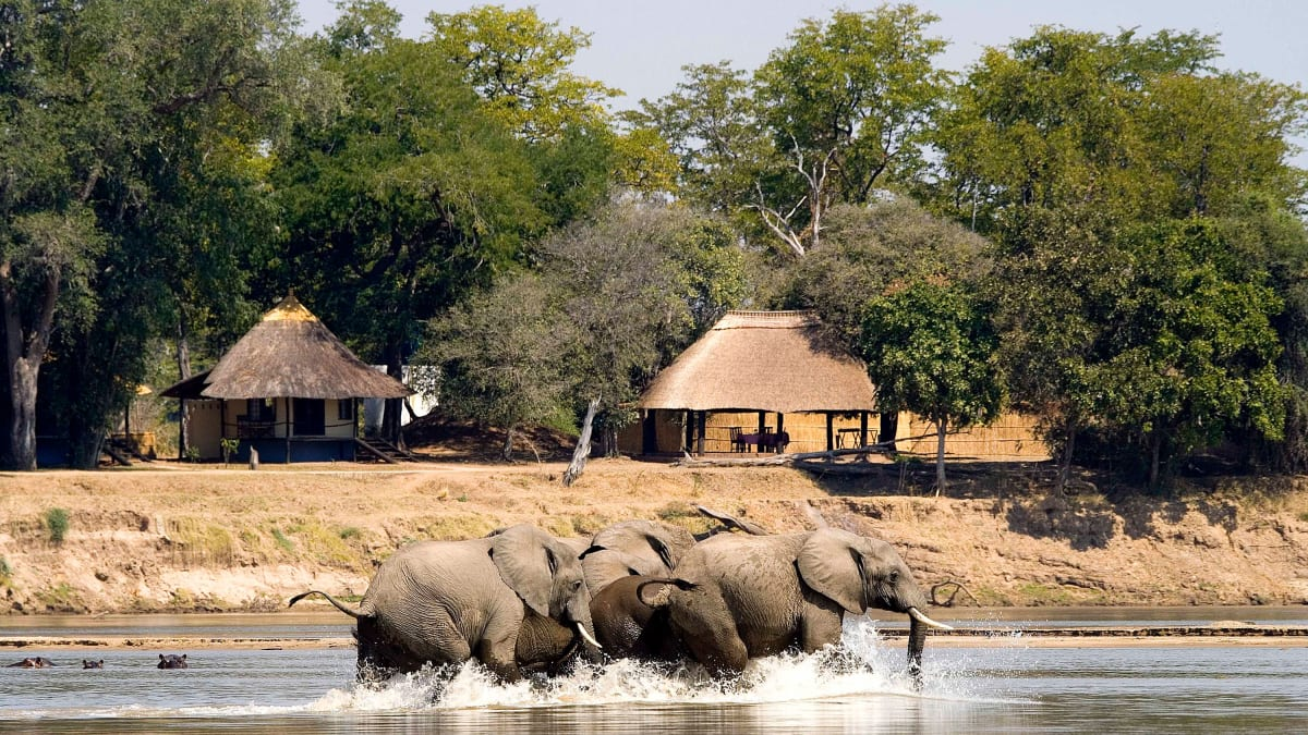 Why Zambia Should Be Your First Safari