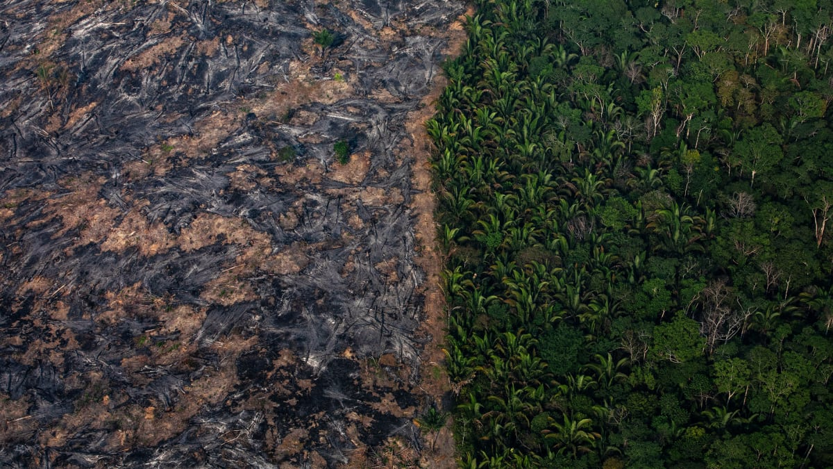 The Amazon Fires Aren't Depleting Earth's Oxygen Supply