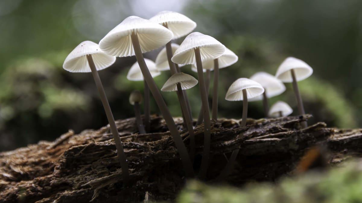 'Fantastic Fungi': Let Brie Larson Introduce You to the World of Magic Mushrooms