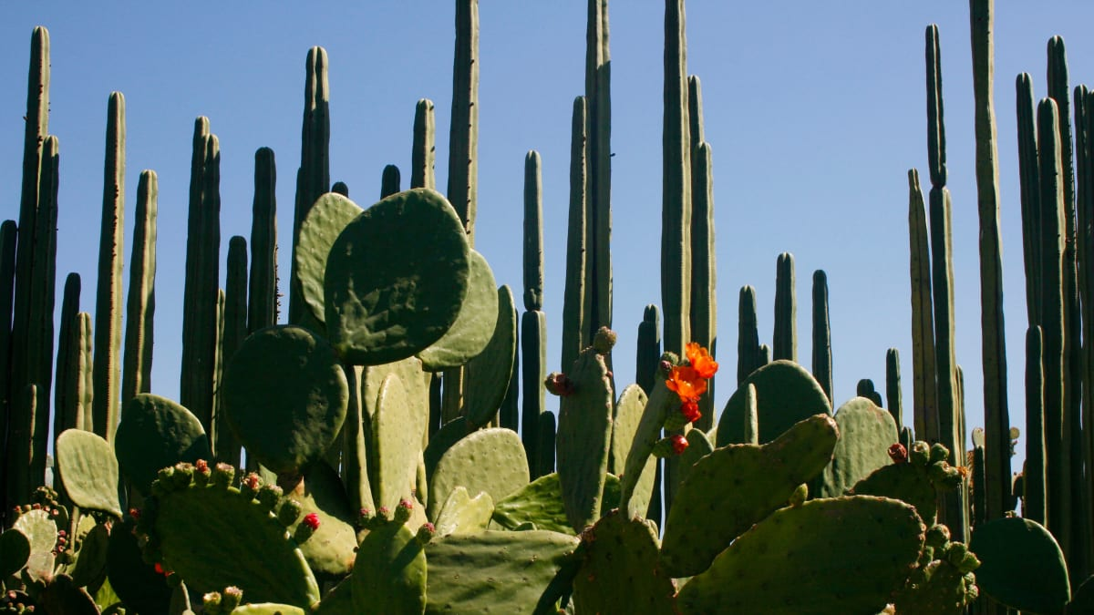 Paul Theroux Wants You to Know That You Don't Know Mexico
