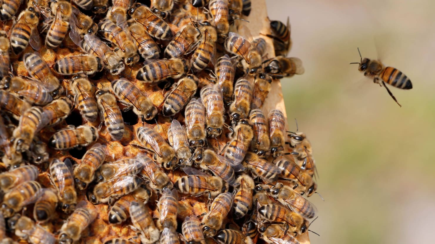 Notre Dame Bees Survived Fire