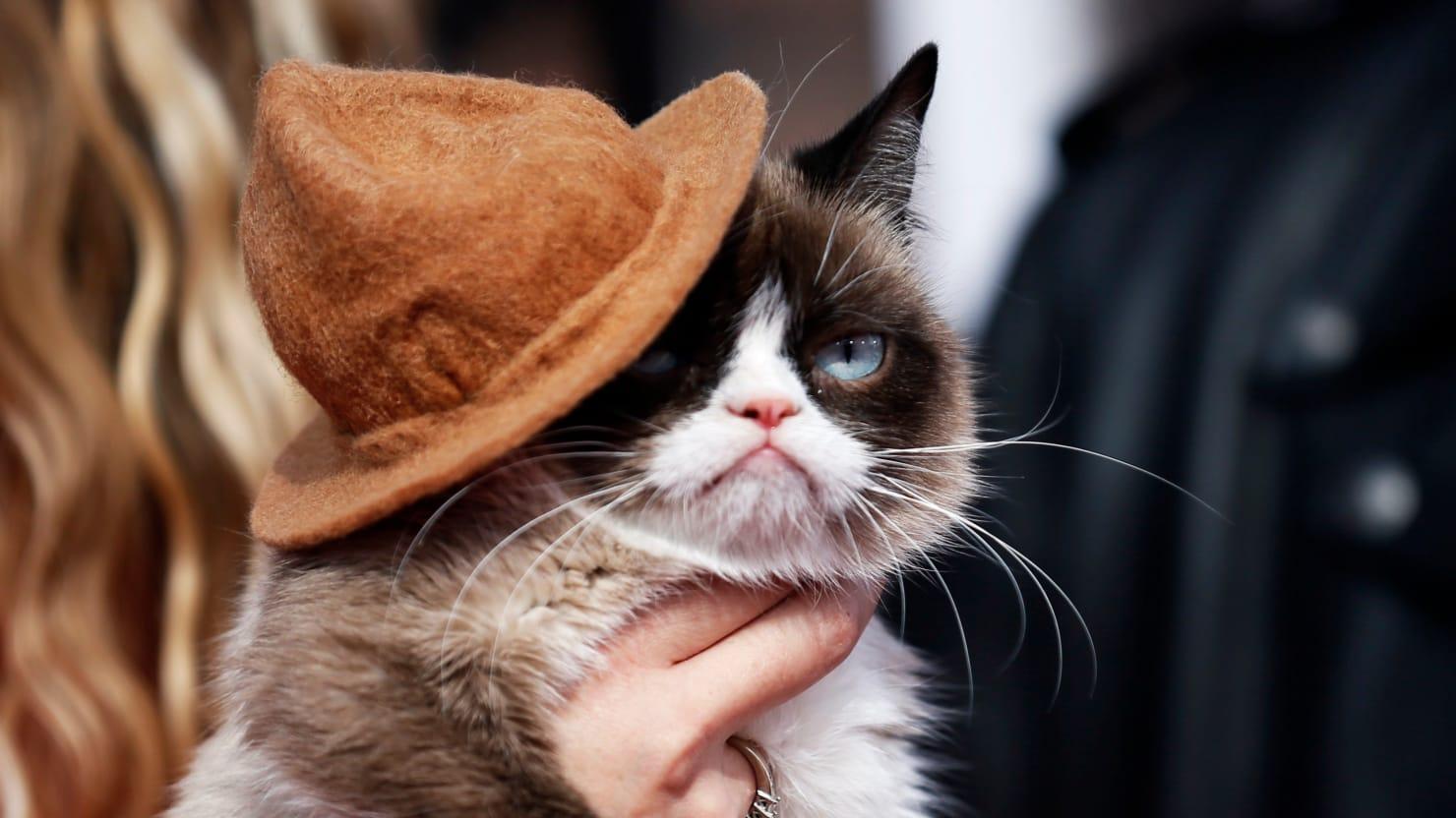 Grumpy Cat, Internet Sensation, Is Dead at Age 7