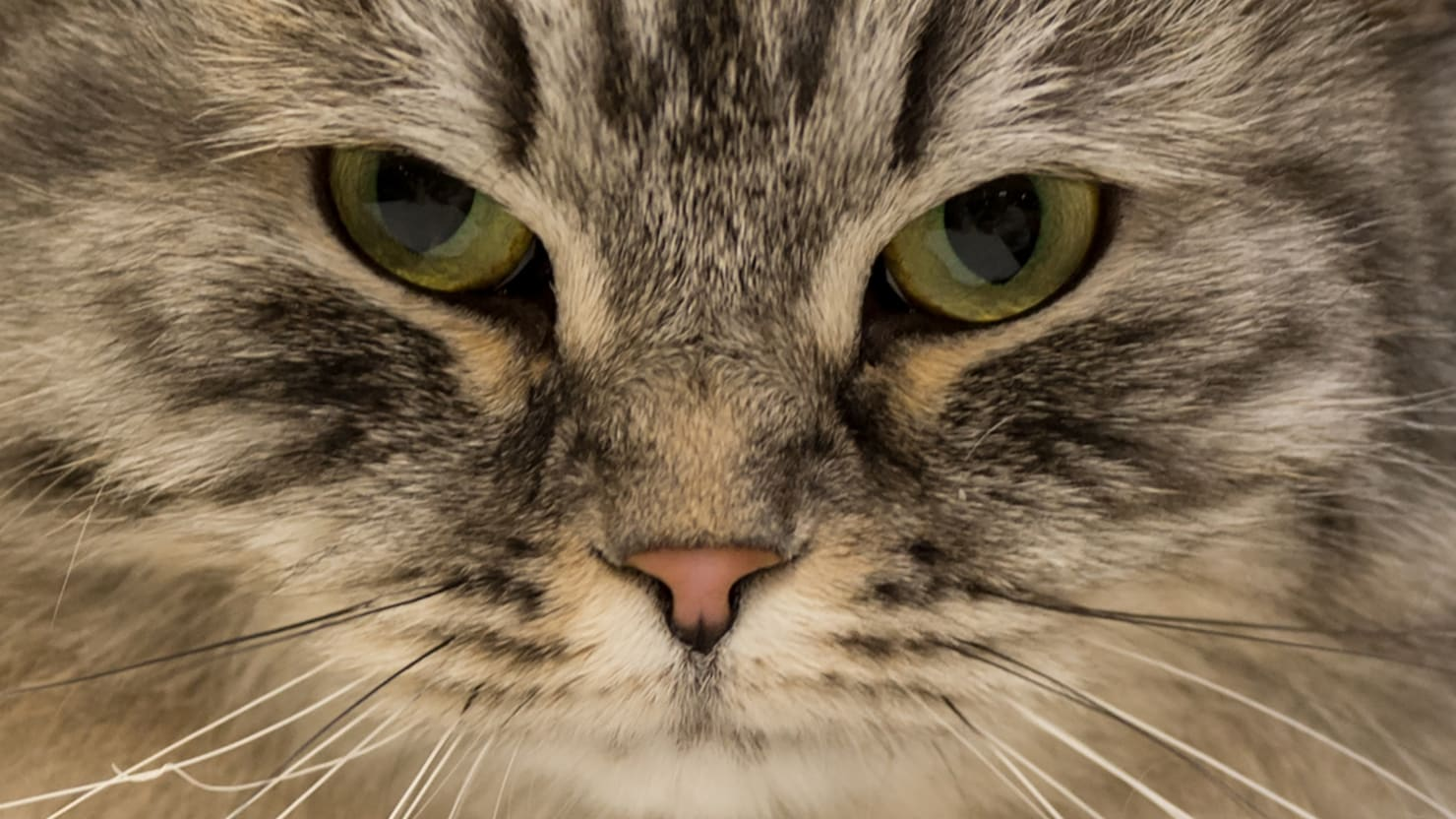 Drug-Smuggling Cat Escapes High-Security Sri Lankan Prison