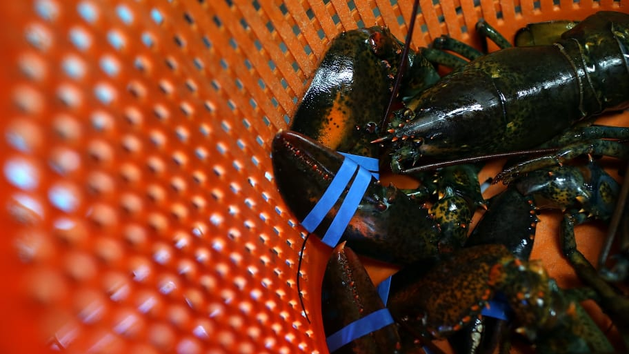 U.S. Lobster Exports to China Freefalling Amid Trade Dispute