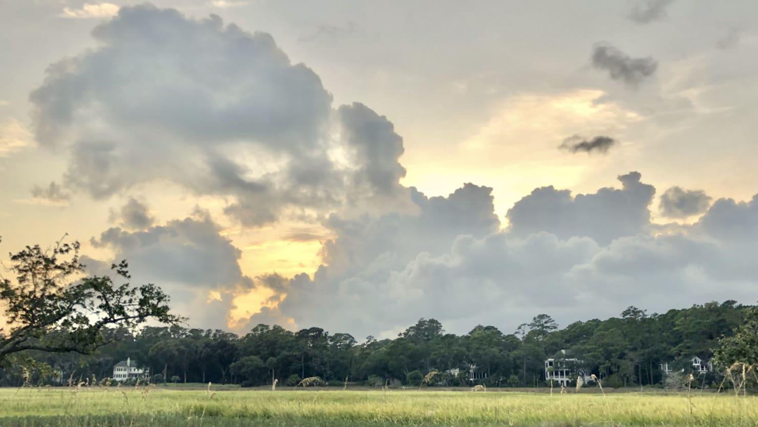 Savannah  - cover