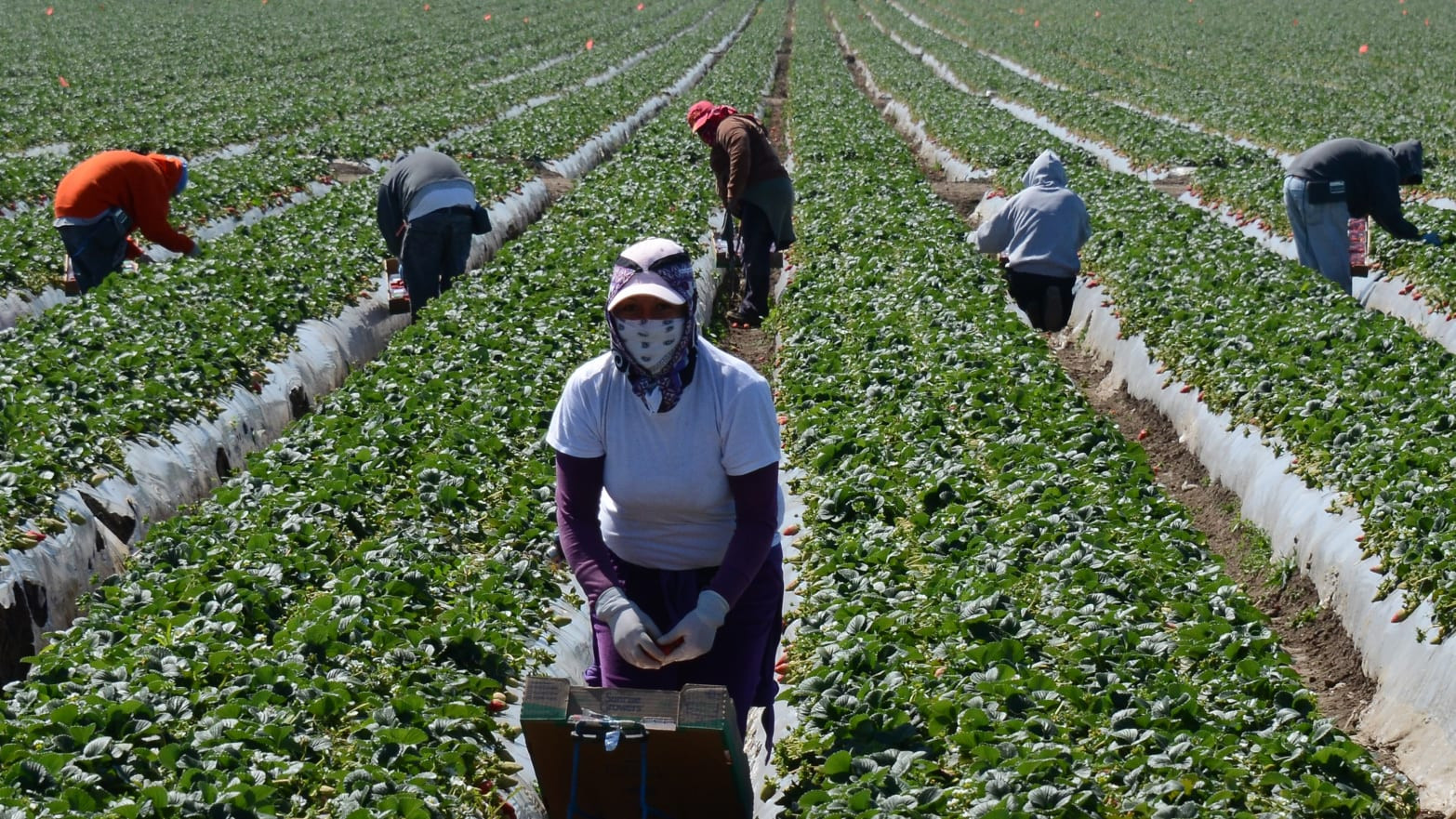 which world regions are best known for their guest worker programs