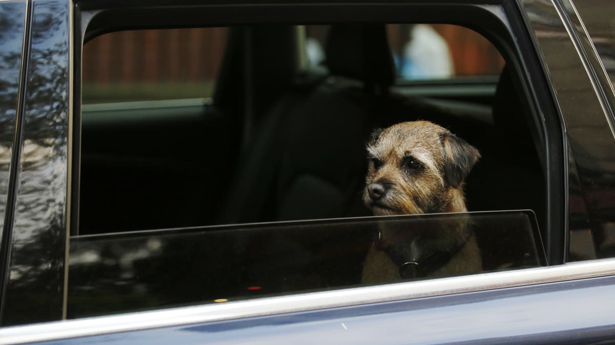 Left in Car on Its Own, Florida Dog Shifts Into Reverse and Drives in Circles for an Hour