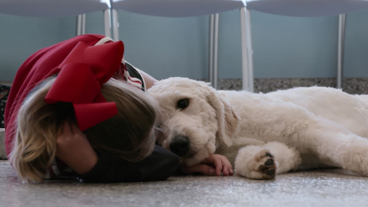 Netflix's 'Dogs' Is the Heartwarming, Feel-Good TV Series of the Year