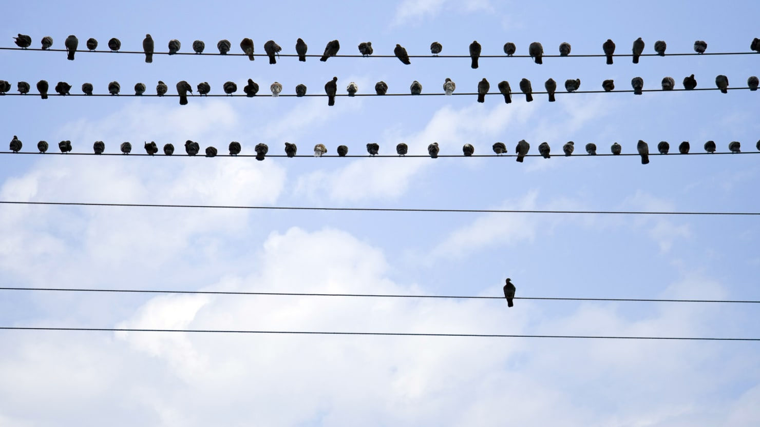 birds on a wire loneliness isolation mental health illness depression