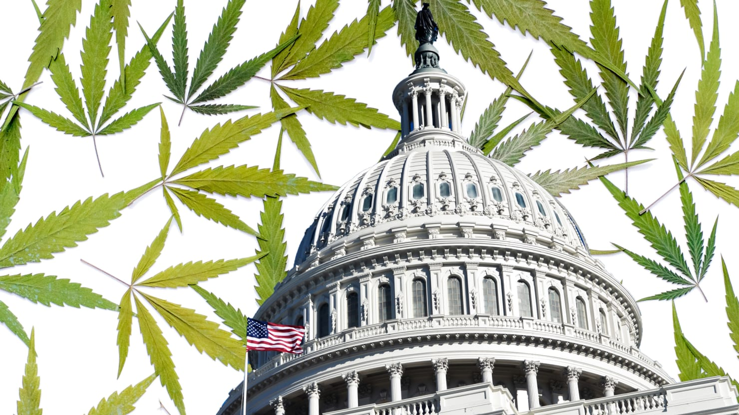 The Real Election Winner: Weed