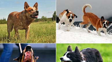 The World's Most Dangerous Dogs