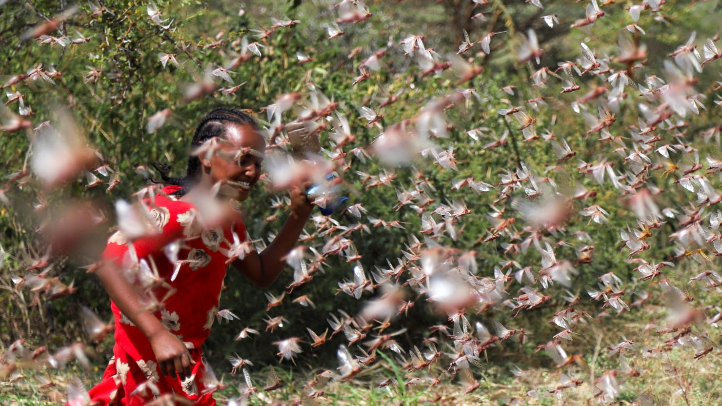 Locusts Could be the Next Plague that Hits China