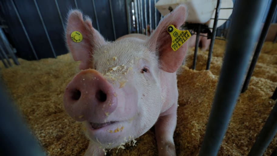 Man Who Confronted Iowa State Fair Officials About Pig Abuse Banned for Life