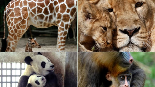 Animal Moms And Their Little Ones Pose For Pics Photos