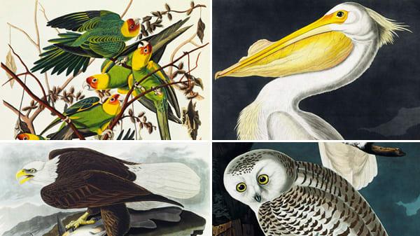 America Auto Auction >> Christie's Auctions Audubon's 'Birds of America': Priciest Book Ever?