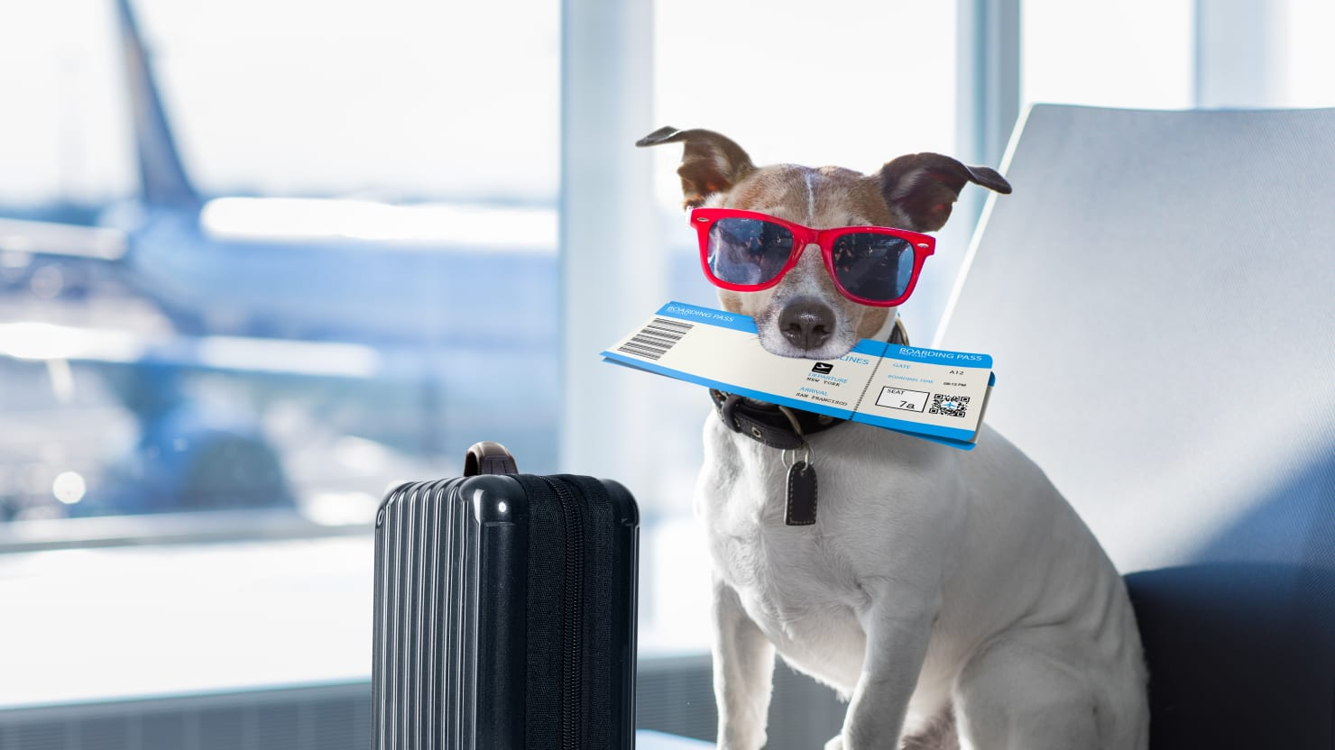 Traveling As A Pet Owner Has Never Been Easier