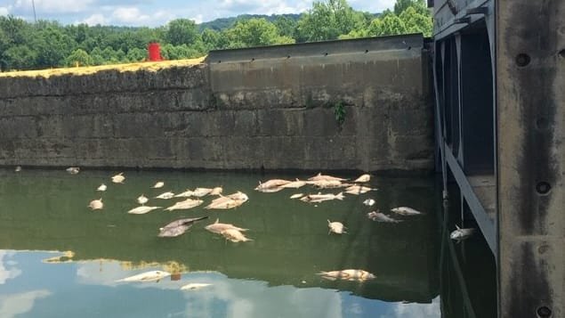 Jim Beam Fire: Thousands of Dead Fish Litter Kentucky River After Blaze