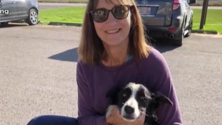 Woman Quits Job, Searches 57 Days for Lost Dog—and Finds Her