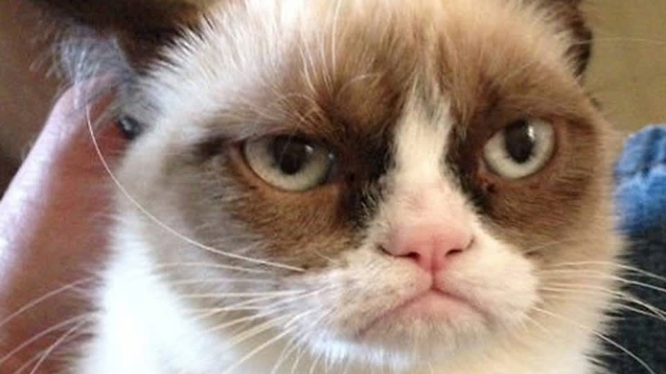 Grumpy cat the movie altavistaventures Choice Image