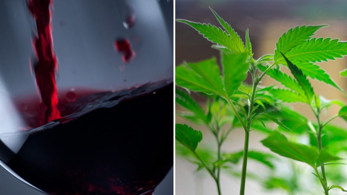 Marijuana-Laced Wine Grows More Fashionable in California Wine Country