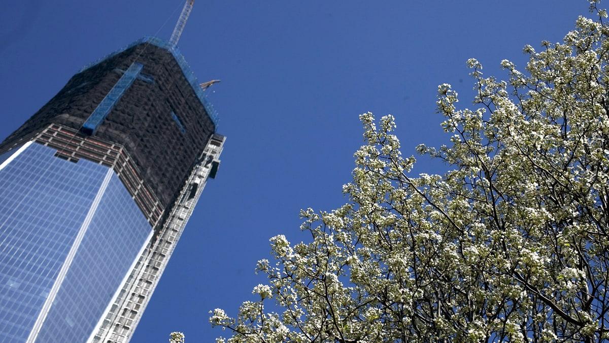 The Sept 11 Survivor Tree In Bloom