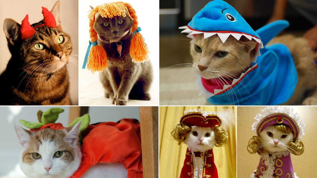 cats in halloween costumes