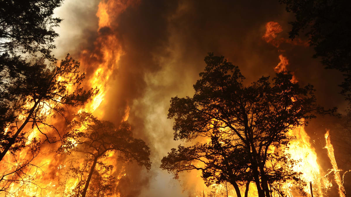 Texas Bastrop Fire Photos Videos Of Blaze