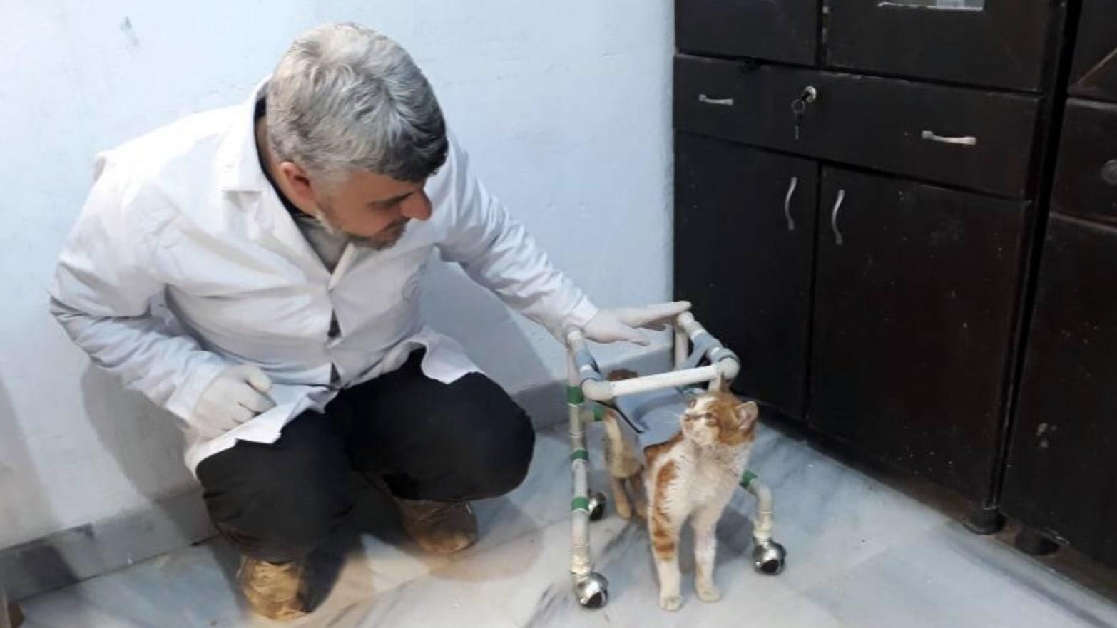 The Man Saving Aleppo's Homeless Kittens