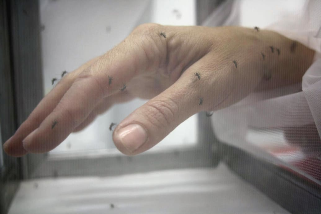 Mosquitoes Love Some People More and Science Wants to Know Why