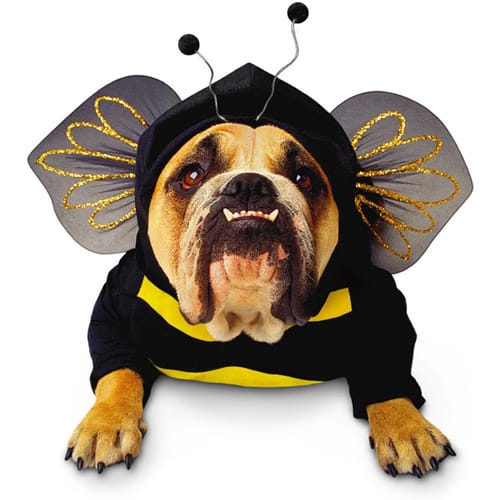 Most Popular Pet Halloween Costumes for 2011: Photos